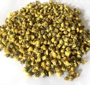 Tongxiang Yang chrysanthemum bud