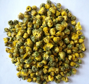 ningboTongxiang authentic chrysanthemum bud