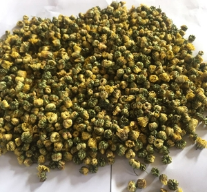 ningboSuper Tongxiang chrysanthemum bud King